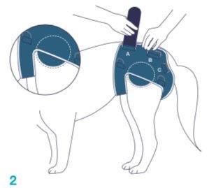 Balto-BT-LIFE-Dog-Brace-Fitting-2