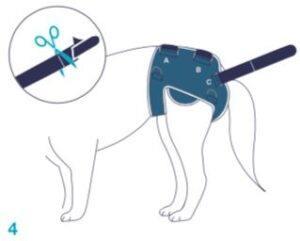 Balto-BT-LIFE-Dog-Brace-Fitting-4