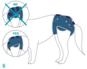 Balto-BT-LIFE-Dog-Brace-Fitting-5