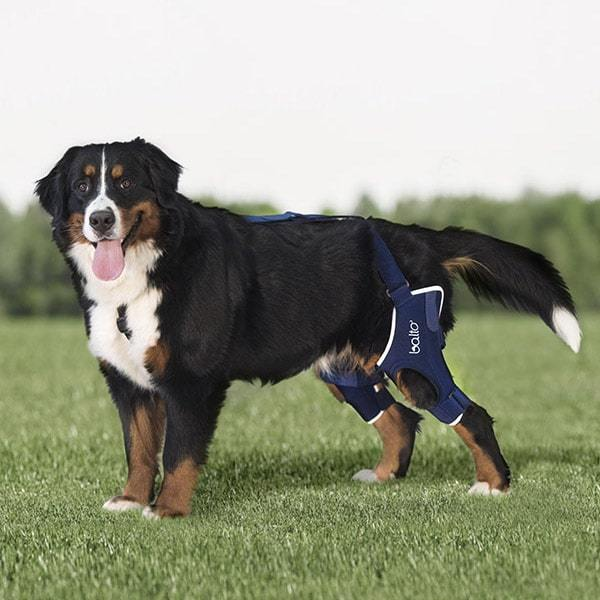 walkabout dog knee brace