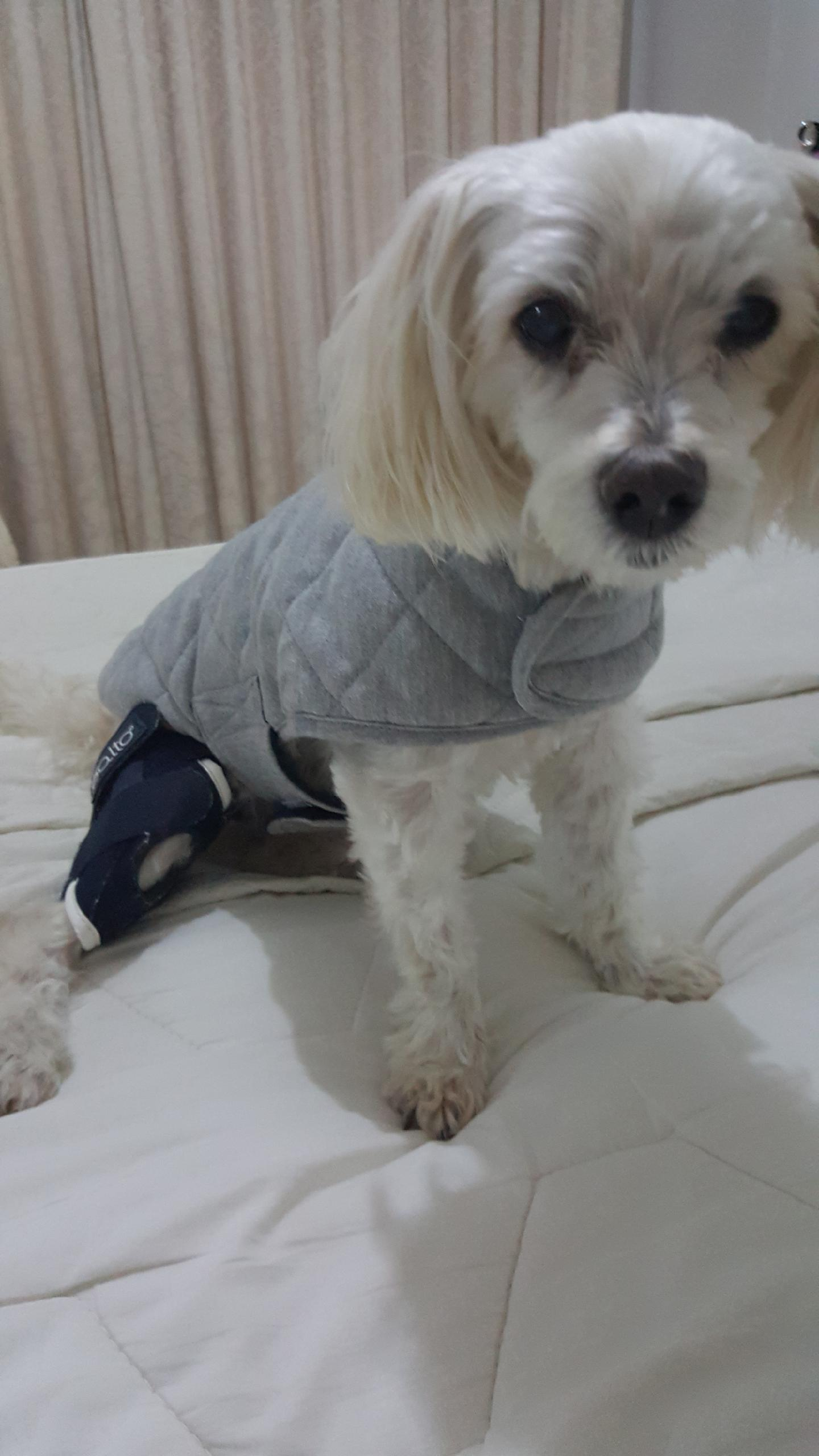 Dog cruciate brace BALTO Small breed